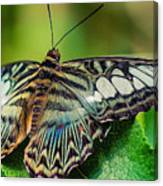 Blue Clipper - Looking Up Canvas Print