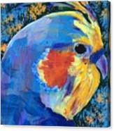 Blue Cockatiel Canvas Print