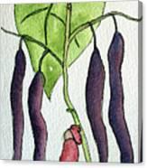 Blue Coco Beans Canvas Print