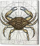 Blue Crab Canvas Print