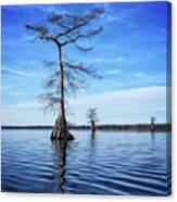 Blue Cypress Canvas Print