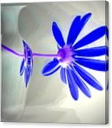 Blue Daisy Delight Canvas Print