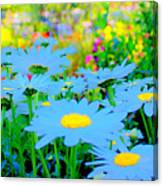 Blue Daisy Canvas Print