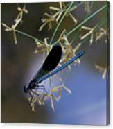 Blue Damsfly Canvas Print