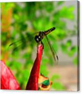 Blue Dasher Damselfly Canvas Print