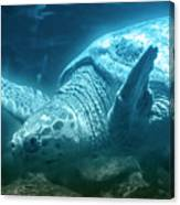 Blue Depths Sea Turtle Canvas Print