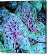 Blue Caladium Canvas Print