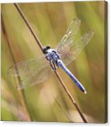 Blue Dragonfly Against Green Grass Canvas Print