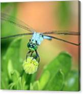 Blue Dragonfly And Bud Canvas Print
