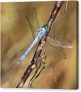 Blue Dragonfly Portrait Canvas Print