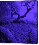 Blue Dreaming Moon Canvas Print