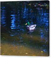 Blue Duck Canvas Print