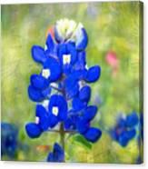 Blue-est Of Blues Canvas Print