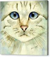 Blue-eyed Cat Canvas Print