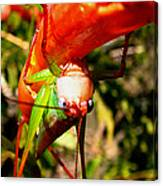 Blue Eyed Grasshopper 2 Canvas Print