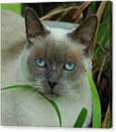 Blue Eyes In The Garden Canvas Print