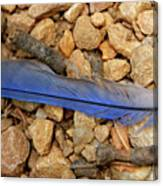 Blue Feather Canvas Print
