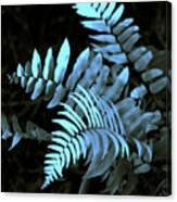 Blue Fern Canvas Print