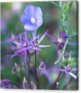 Blue Flax Wildflower With Purple Allium In Foreground Canvas Print