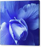 Blue Floral Begonia Canvas Print