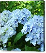 Blue Floral Hydrangea Flower Summer Garden Basle Troutman Canvas Print