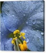 Blue Spring Flower Canvas Print