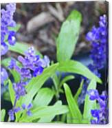 Blue Flowers B5 Canvas Print