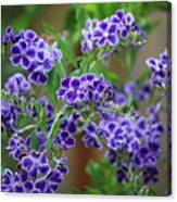 Blue Flowers Card Canvas Print