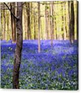 Blue Forest In Shadow Canvas Print