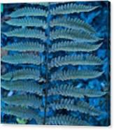 Blue Frond Canvas Print