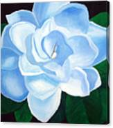 Blue Gardinia Canvas Print