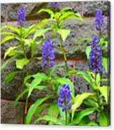 Blue Ginger At The Wall Canvas Print