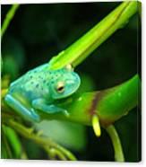 Blue-green Tropical Frog Canvas Print