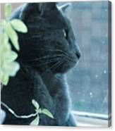 Blue Grey Contemplating Cat Canvas Print