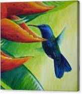 Blue-headed Hummingbird Canvas Print
