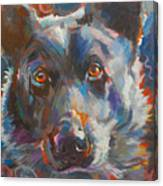 Blue Heeler Canvas Print