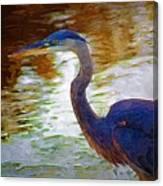 Blue Heron 2 Canvas Print