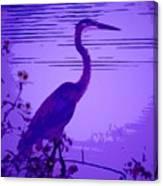 Blue Heron... Canvas Print