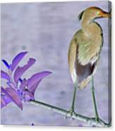 Blue Heron Colorized Canvas Print