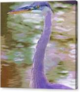 Blue Heron Canvas Print