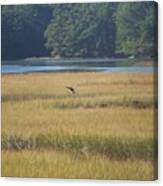 Blue Heron ...in Flight Canvas Print