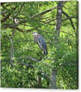 Blue Heron In Green Tree Canvas Print