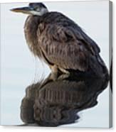 Blue Heron In Reflection, St. Marks Wildlife Refuge, Florida Canvas Print