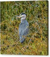 Blue Heron In The Autumn Colours Canvas Print