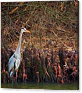 Blue Heron In The Cypress Knees Canvas Print