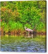 Blue Heron-in The Swamp-20 Canvas Print