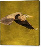 Blue Heron On Gold Canvas Print