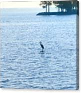 Blue Heron On The Chesapeake Canvas Print