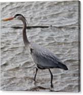 Blue Heron  On The Lake Canvas Print