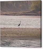 Blue Heron On The Yellowstone Canvas Print